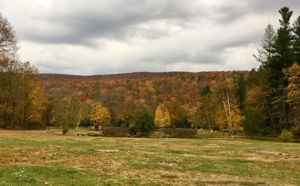 Colorful trees at Camp Workroom Social in October 2016