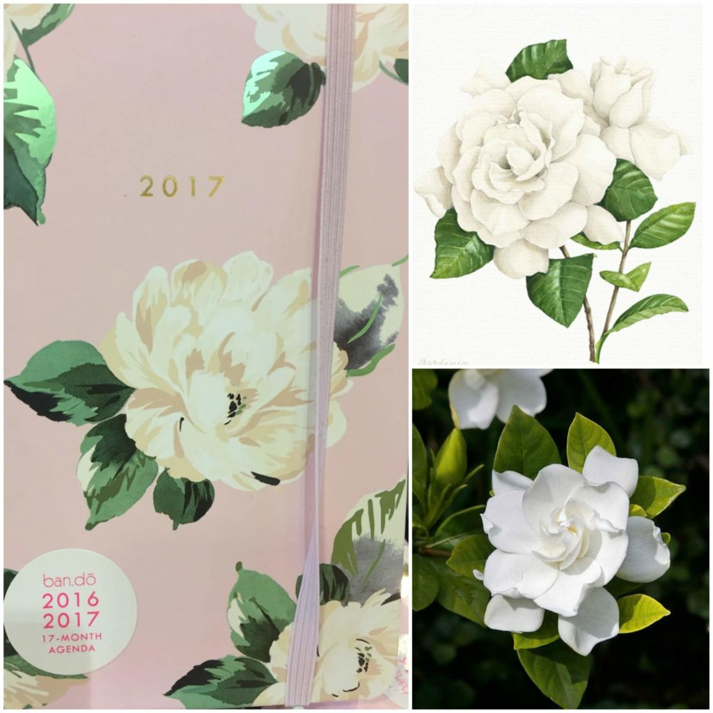 Three gardenia images that could be used in Cameron's custom wedding dress by Brooks Ann Camper Bridal Couture